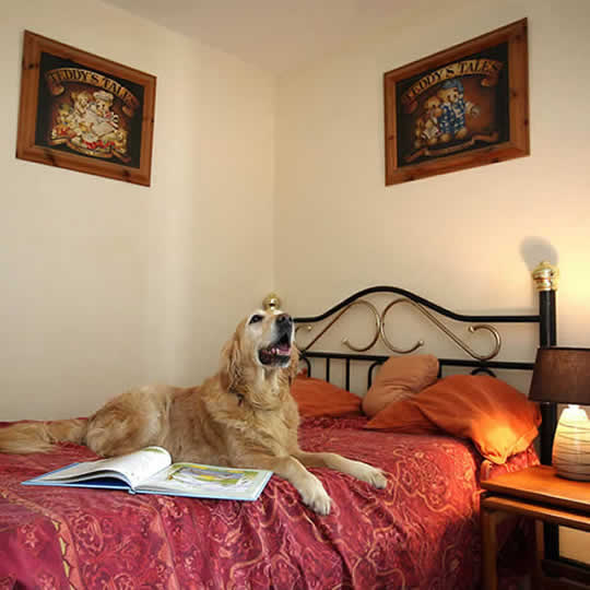 Luxury dog hotel suite at the Canine Country Club