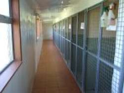Haven Boarding Kennels in Ashford, Kent