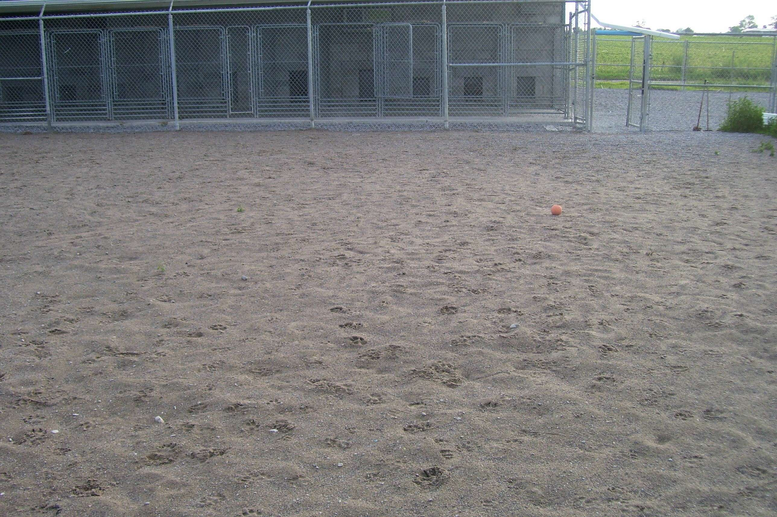 Dog Kennels Bowmanville Ontario