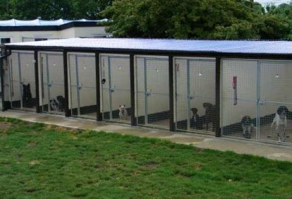 Best Dog Kennels Suffolk