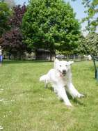 Westlodge Boarding Kennels in Cambridge Cambridgeshire
