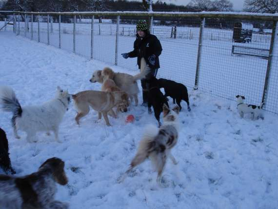 dog welfare in kennels