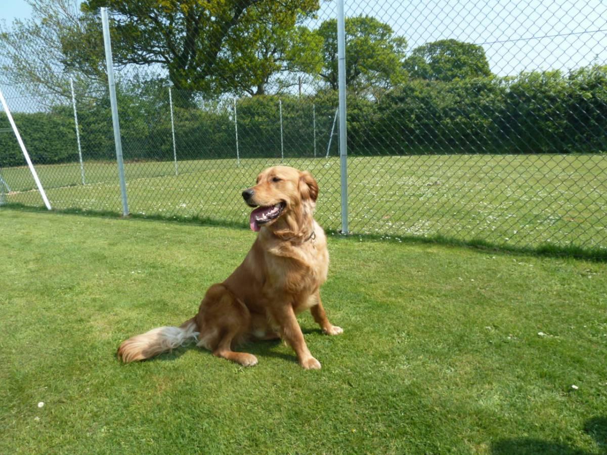 Dog Boarding Kennels Norwich