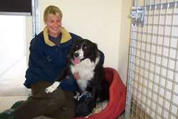 Boarding Kennels For Dogs In Powys