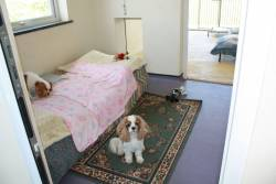The Canine Country Club Dog Hotel in Bude Cornwall