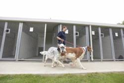 Boarding Kennels Fees