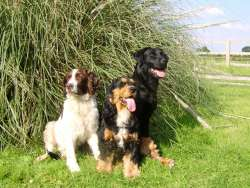 Ashtree boarding kennels Boarding Kennels in Goole East Riding of Yorkshire