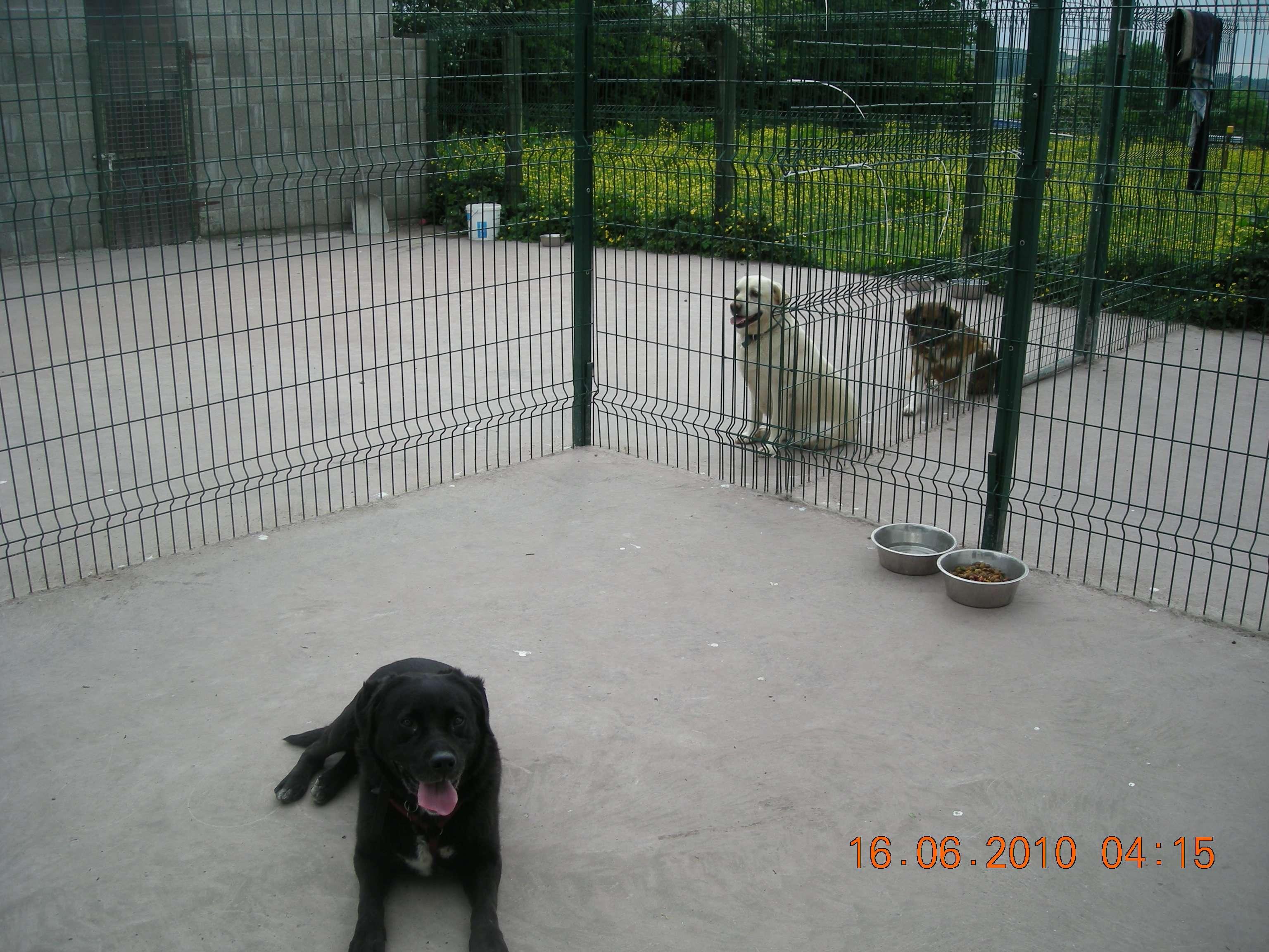 Dog Adoption Bay Village Ohio