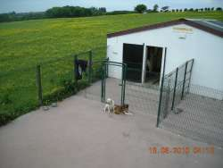 Boarding Kennels Location