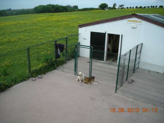 kennels location