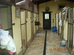 Dog Welfare in Boarding Kennels