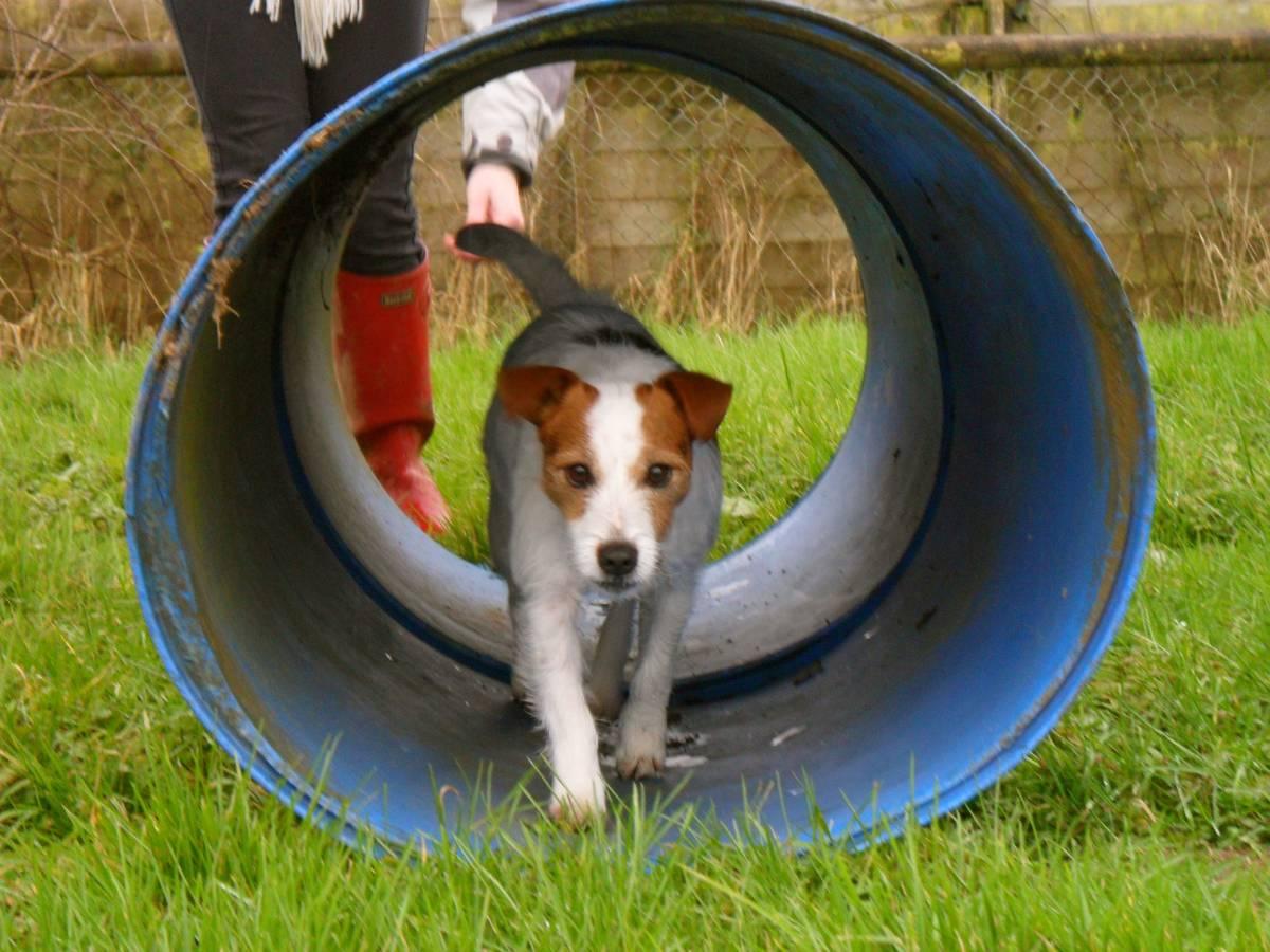 Dog Kennels Bideford