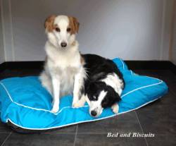 Bed & Biscuits Pet Retreat in Newmilns, Nr Kilmarnock, Ayrshire
