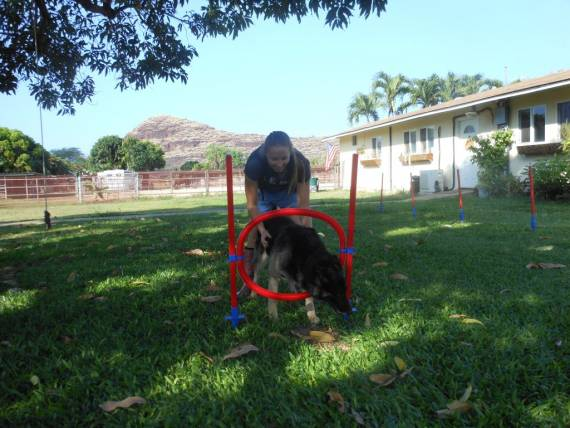 Tradewinds Pet Suites in Hawaii