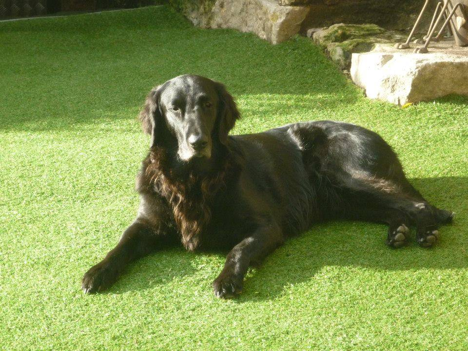 Home Boarding For Dogs In Derbyshire