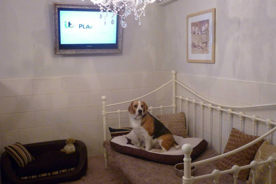 Welcome To Waggytails Hotel And Home Boarding In Matlock