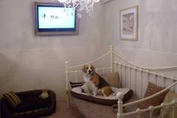 Waggytails Hotel and Home Boarding Dog Hotel in Matlock Derbyshire