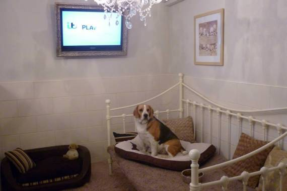 Waggytails Hotel And Home Boarding in Derbyshire