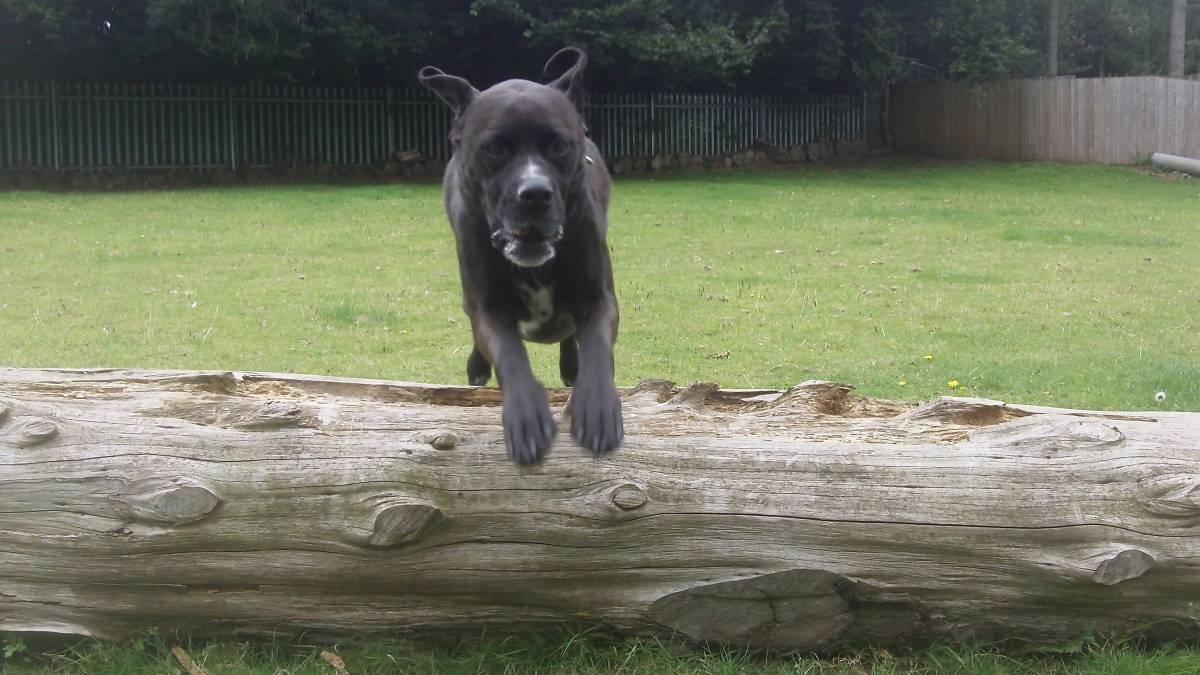 Dog Kennels Bromsgrove