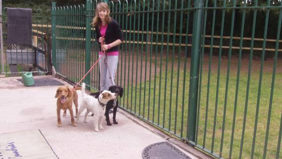 Welcome To A  U0026 B Dogs In Bromsgrove  Worcestershire