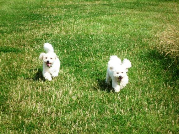 Dog Walks Daventry