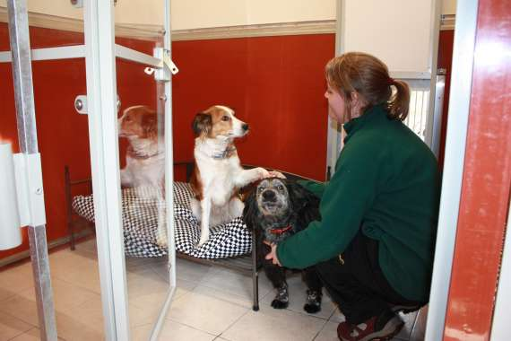 Woodland View Luxury Boarding Kennels And Doggie Daycare in Cheshire