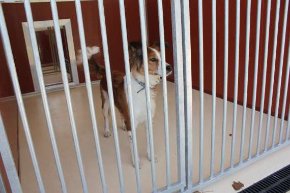 Dog Kennels Winsford Cheshire
