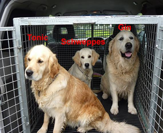Kilmessan Kanine Kennels in Dublin / Meath