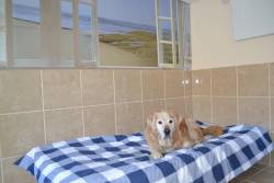 Westlodge Dog Hotel 