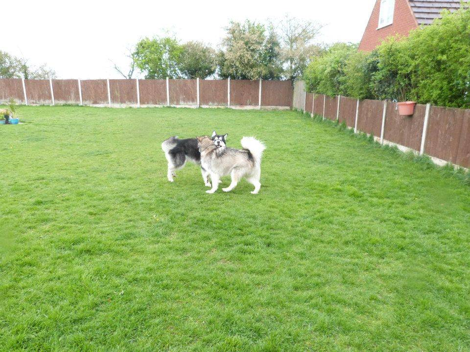 Dog Kennels Coventry