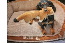 Haselor Hill Kennels 