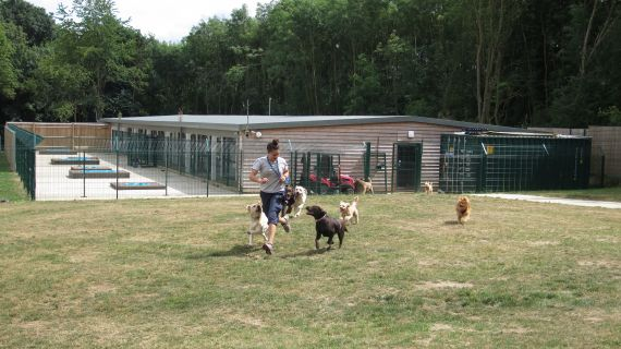 Welcome To Elmtree Canine Country Club In Waltham Cross