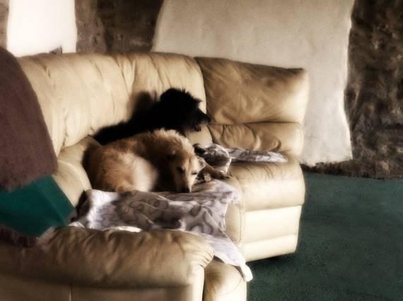 Dog Kennels In Alfreton Area